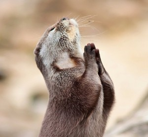 prairie-dog-in-prayer-300x277